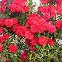 Clg.-Heidelberg-jardines-patagonia-vivero-meliquina