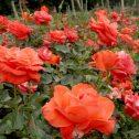 Malicorne--Beverly-Hills-jardines-patagonia