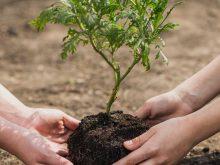 El hombre que plantaba arboles : Libro recomendado.