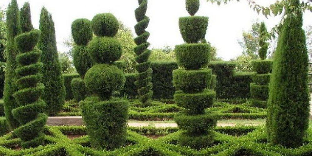El arte topiario jardines de la patagonia - Plantas para vallas ...
