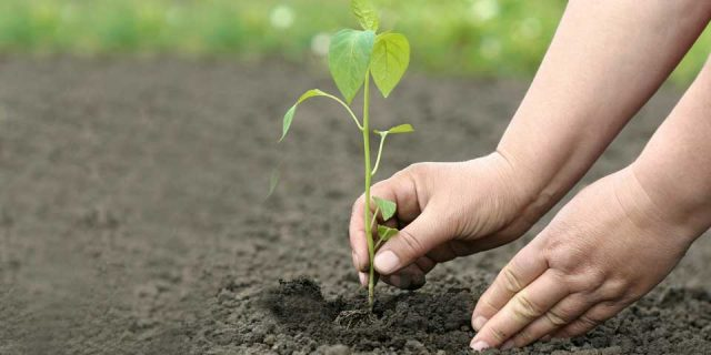 Reforestación: Regresar la vida al planeta.