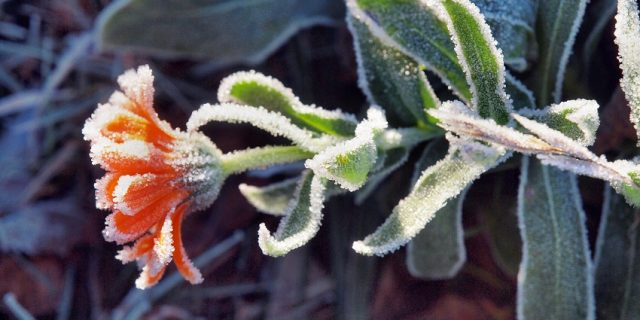 Cómo cuidar tu jardín en invierno