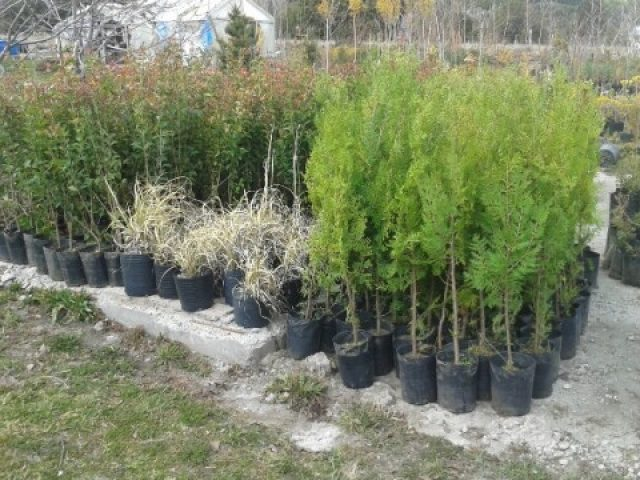 Jardines de la patagonia for Vivero plantas nativas