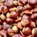 castanos-jardines-patagonia-vivero
