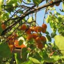 damascos-y-damascas-jardines