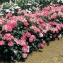 dynastie-rosales-jardines-patagonia