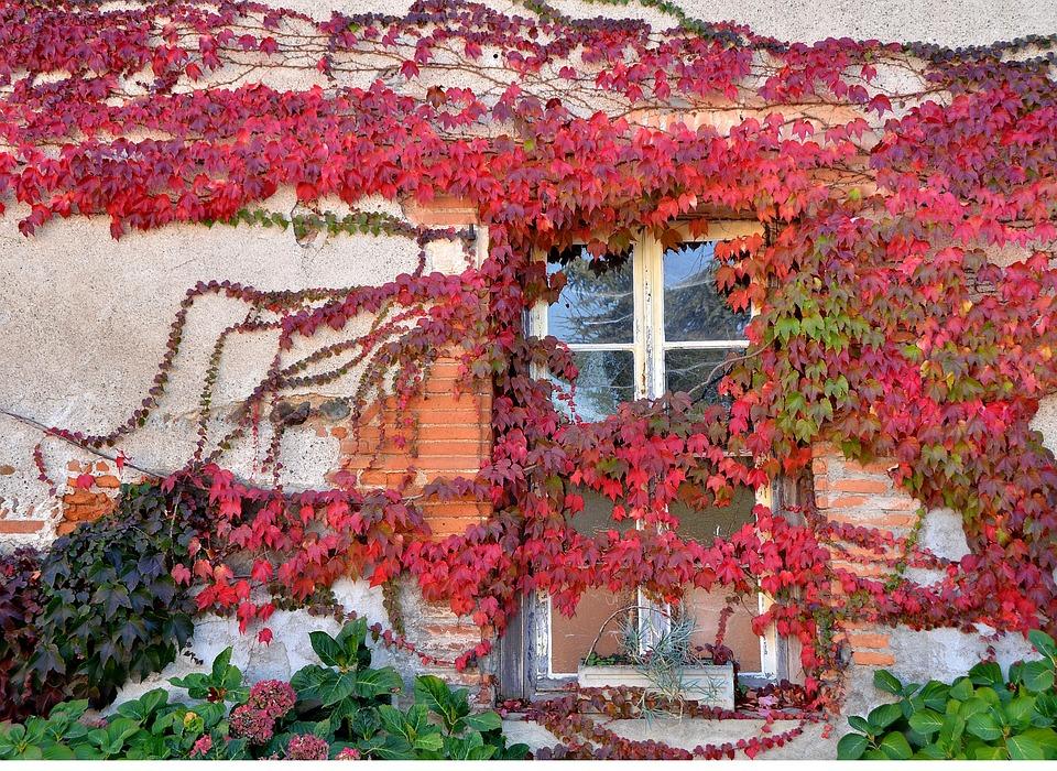 Las mejores trepadoras o enredaderas jardines de la for Plantas trepadoras para muros