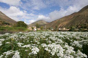 jardines-de-la-patagonia-viver