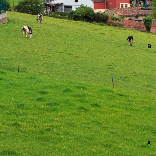 jardines-patagonia-y-vacas