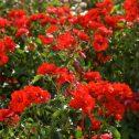 la-sevillana-jardines-patagonia-vivero