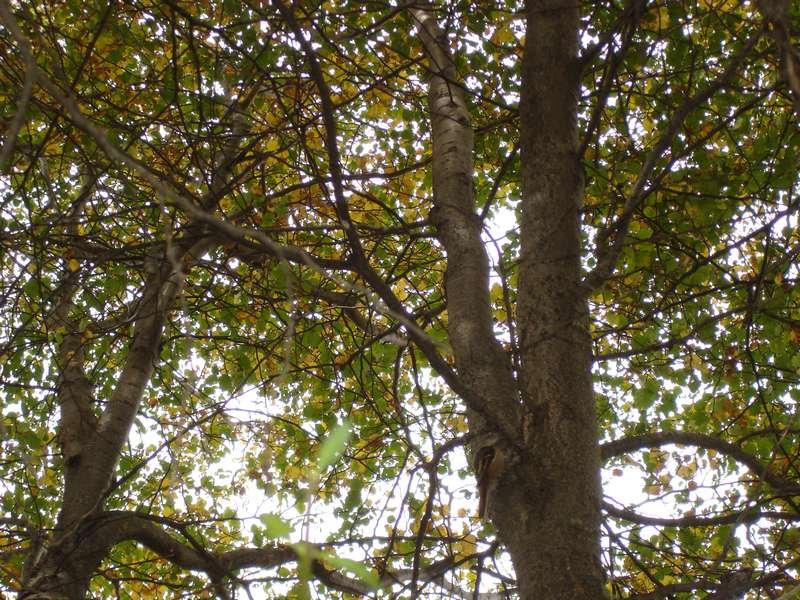 Conoce la lenga nativa patagonica jardines de la patagonia for Viveros zona sur